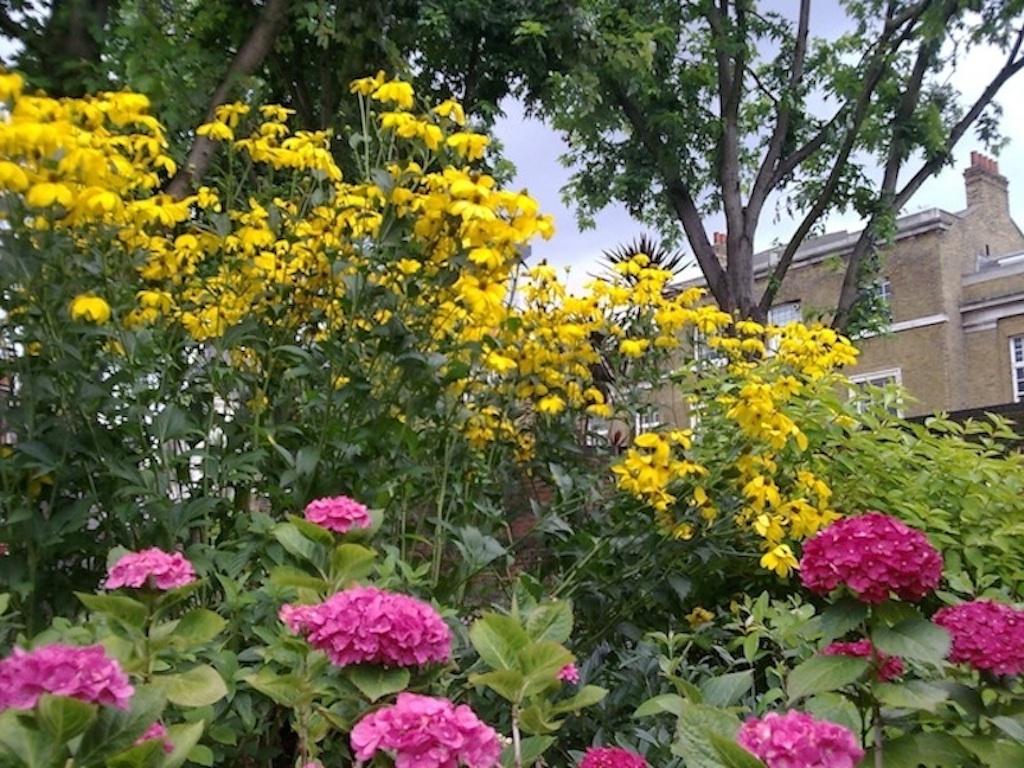 Flowers In Bernie Spain Gardens   Courtesy of Coin Street Community Builders