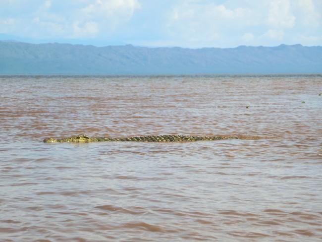 Nile Crocodile | © David Stanley/Flickr