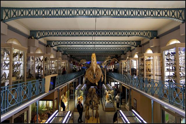 Musée d'Historie Naturelle de Lille | ©Guillaume DELEBARRE/Flickr