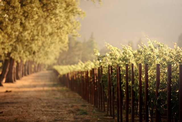 Napa Valley vineyards © Aurimas_Flickr