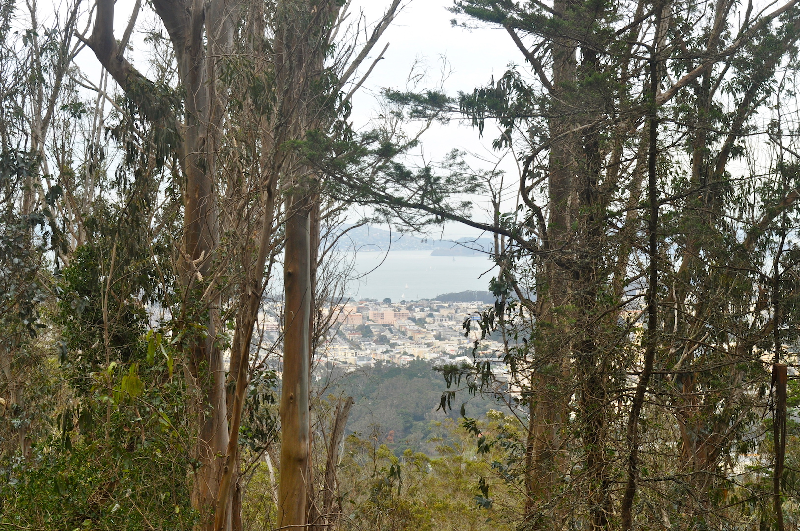 A view of the city and bay peak through trees at the top of Mt. Sutro Forest | © Julia Middlemiss