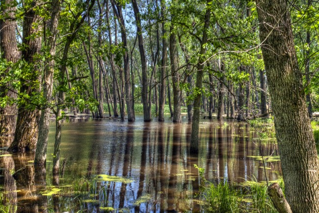 Deer Grove, Palatine   © John Fellner/Flickr