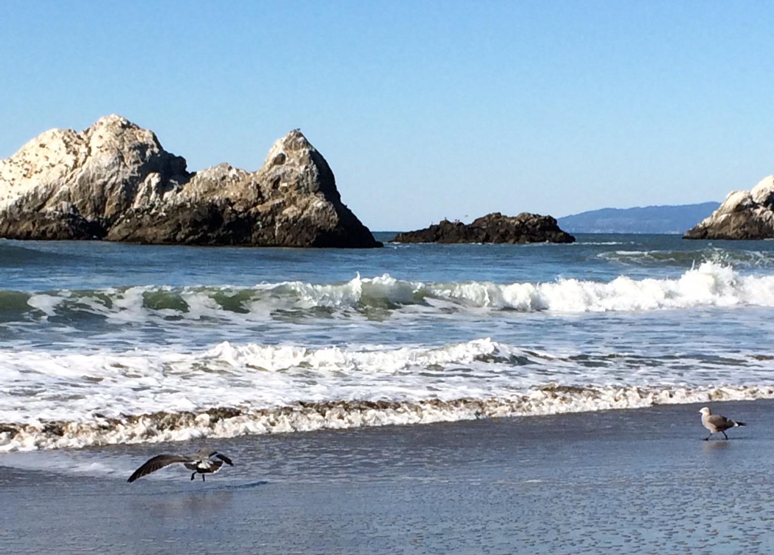 Seal Rocks on Ocean Beach © Tony Bear!