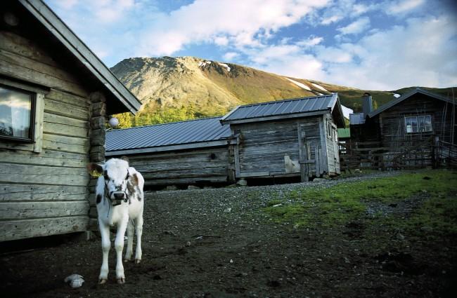 Sånfjället National Park © Jonny Hansson/WikiCommons