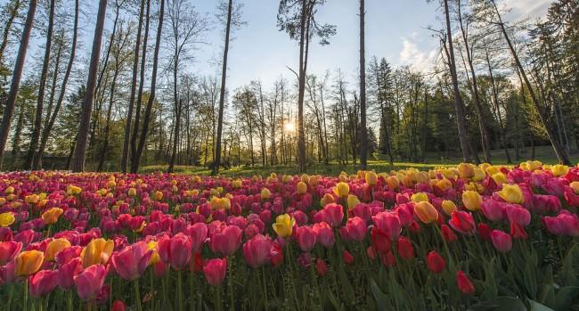Volčji Potok Arboretum | © Aleš Krivec/WikiCommons