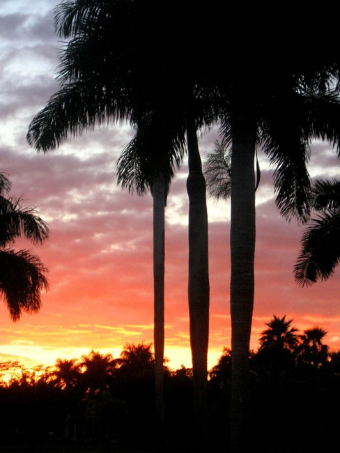 A view of the palm trees in Weston, FL | © Jmichelle88/WikiCommons