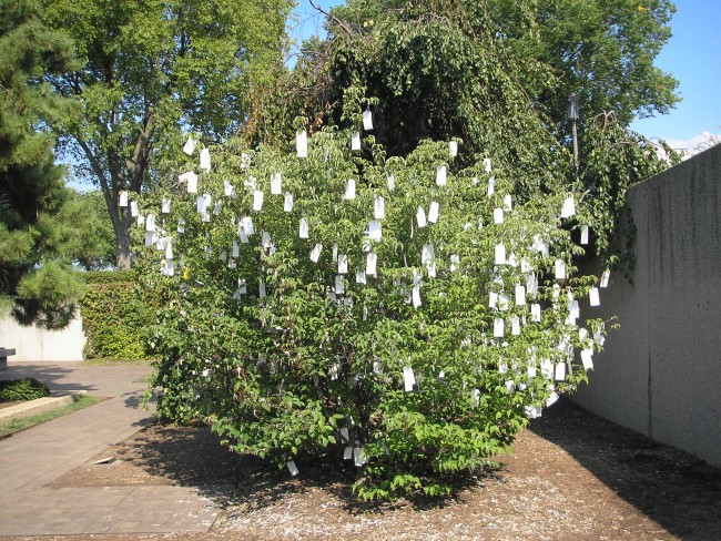 "Wish Tree for Washington, D.C."" by Yoko Ono © Gryffindor/Wikicommons"