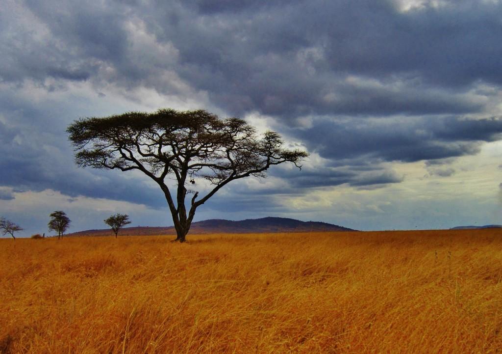 A Tanzanian plain   © Mariamichelle/Pixabay