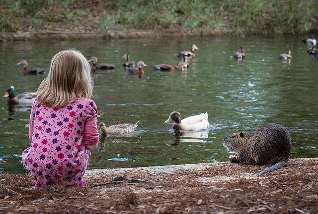 Feeding Ducks at Herman Park | © Brandon/Flickr