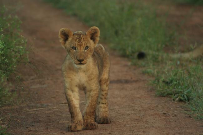Reason to visit: lion, rhino and elephant safaris ©Jenny Bowen