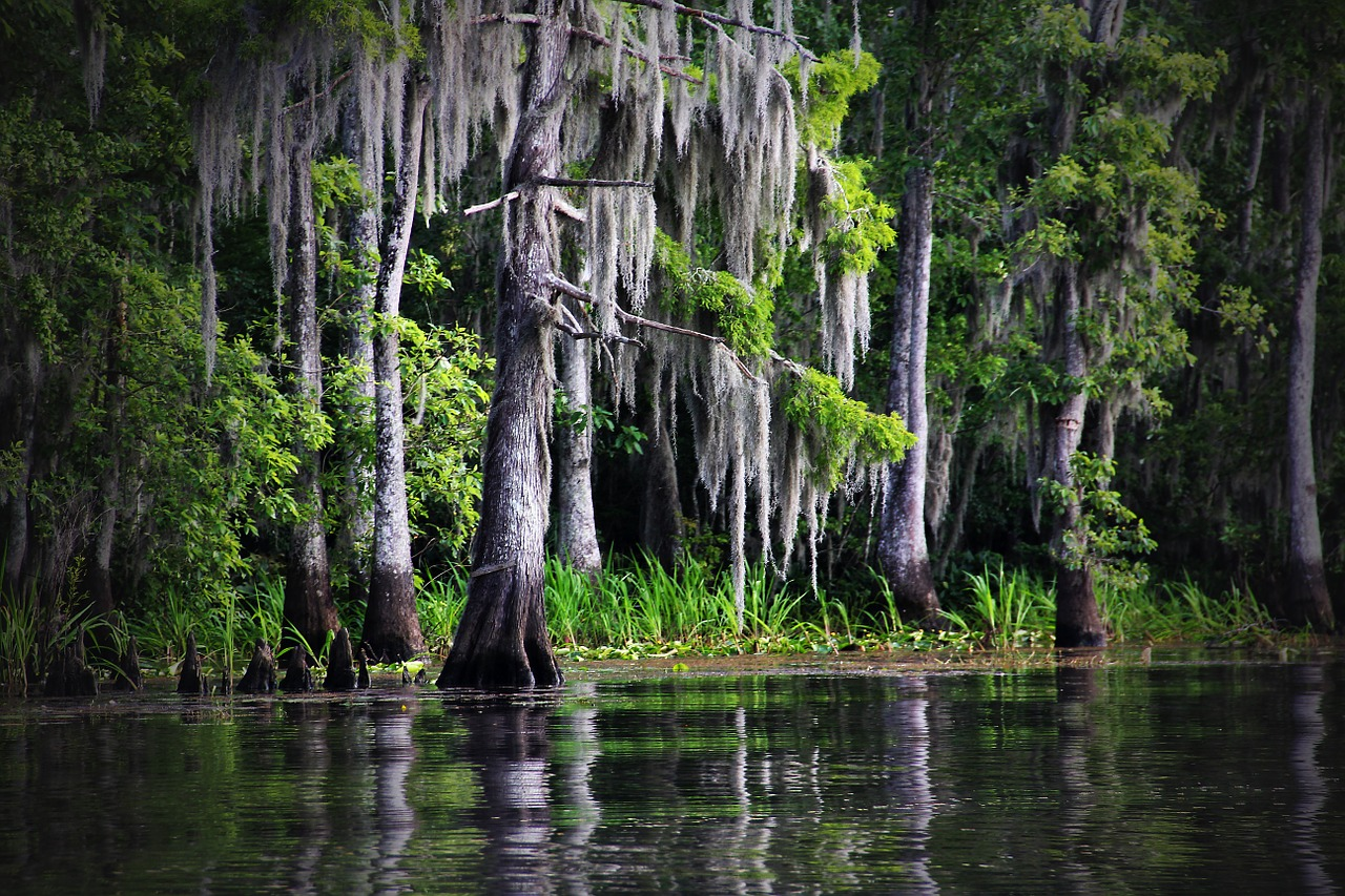 The Louisiana bayou | © glynn424/Pixabay