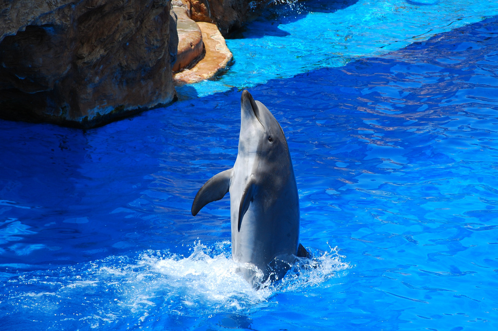 Dolphin Show, Marine Life© Peter & Michelle S / Flickr