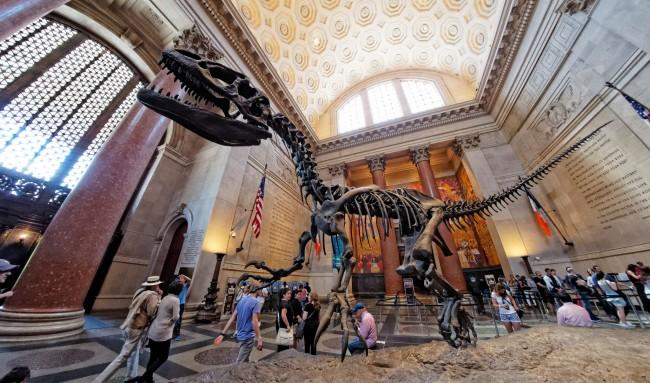 Dinosaur at the American Museum of Natural History | © Don DeBold/Flickr