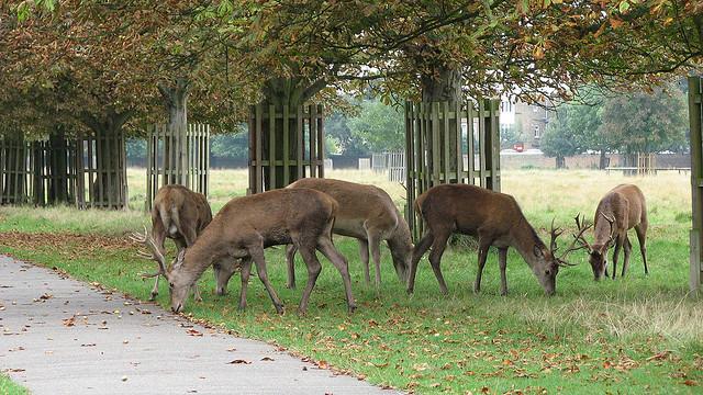 The Best Deer Spotting Parks In Britain