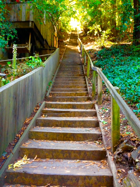 North Star Reach >> Hikes And Bites: Marin County (The Dipsea And Stinson Beach)