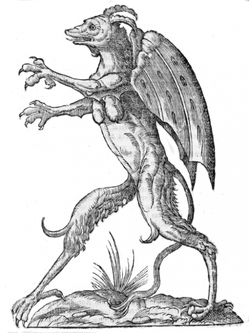 Figure 17 A Monster by Aldrovandi