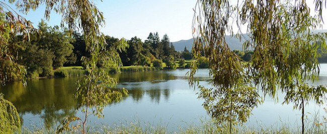 Top 10 Things To Do And See In Los Gatos, California