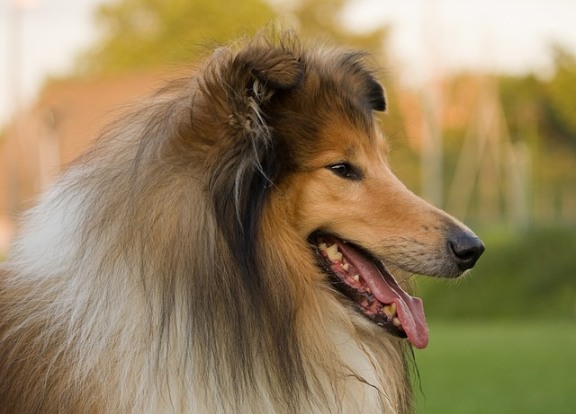 Top 10 Dogs In Literature