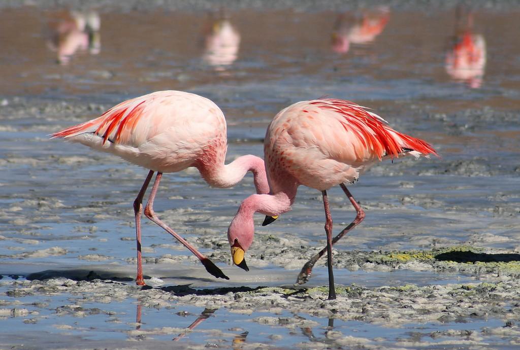 Flamingos | © Valdiney Pimenta / Flickr