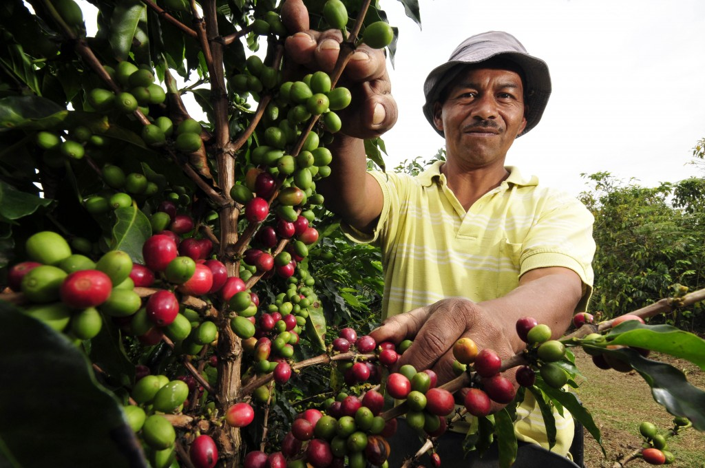 The Origin Of Coffee | © CIAT/Flickr