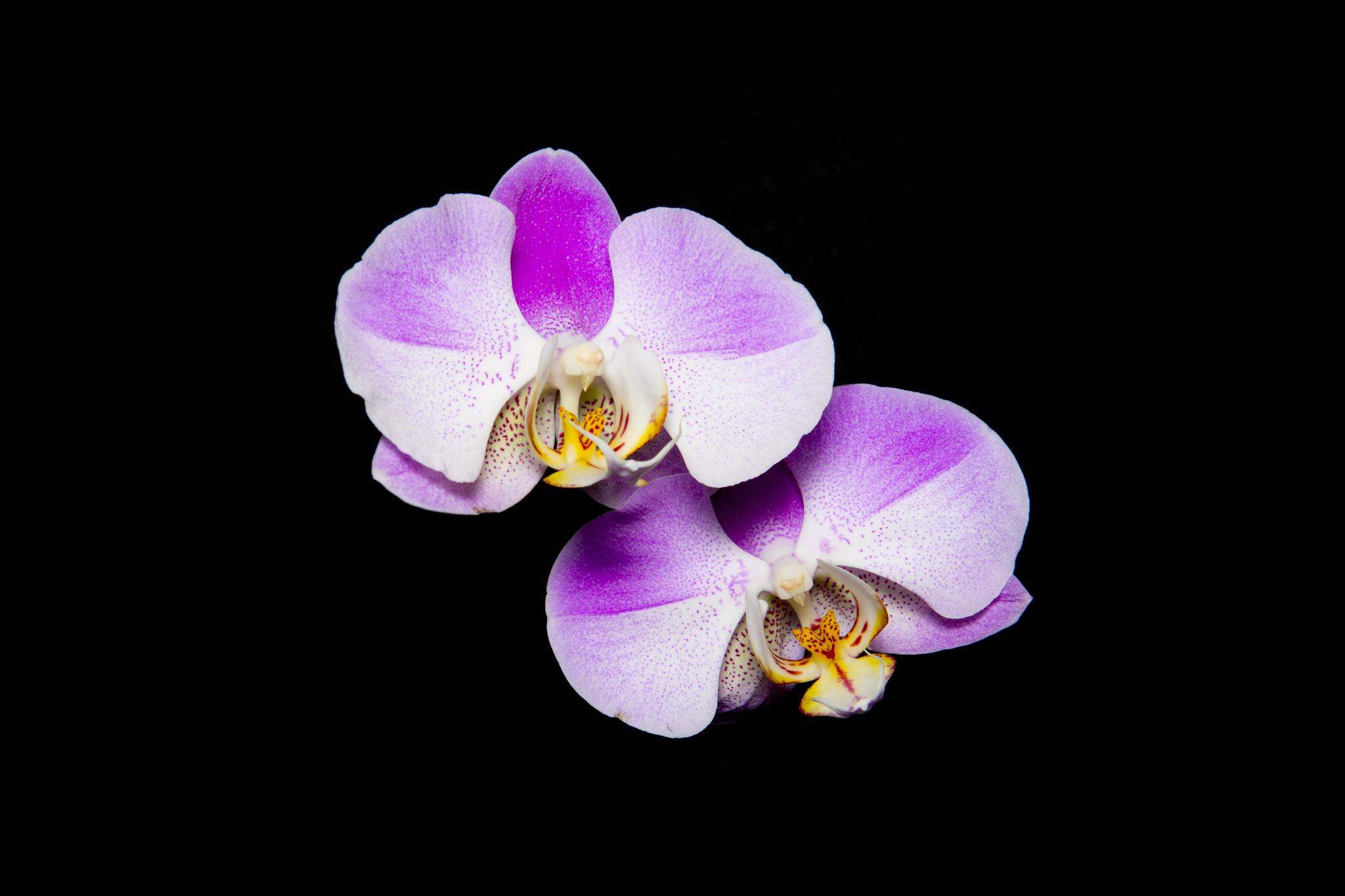 Orchid | © Seokhee Kim/Flickr