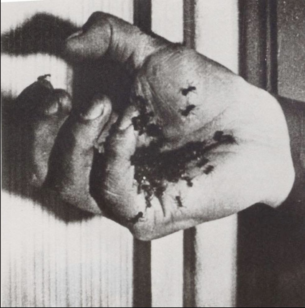 A Visual Retrospective Of Luis Bu 241 Uel S Filmography