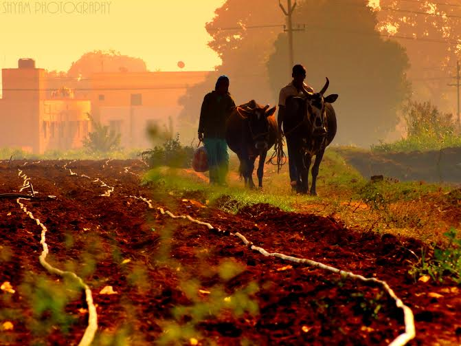 A quiet Morning at Hosur| ©Shyam Sampath