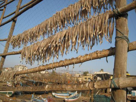 Drying Fish (Bombil) | © Madhav Pal