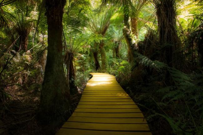Cape Otway| © Paul Carmona/Flickr