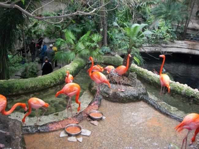 Flamingos at the Dallas Aquarium   © M. Watson