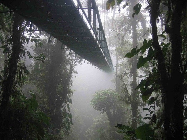 The Sky walk at the Monteverde Cloud Forest Reserve | © WikiCommons