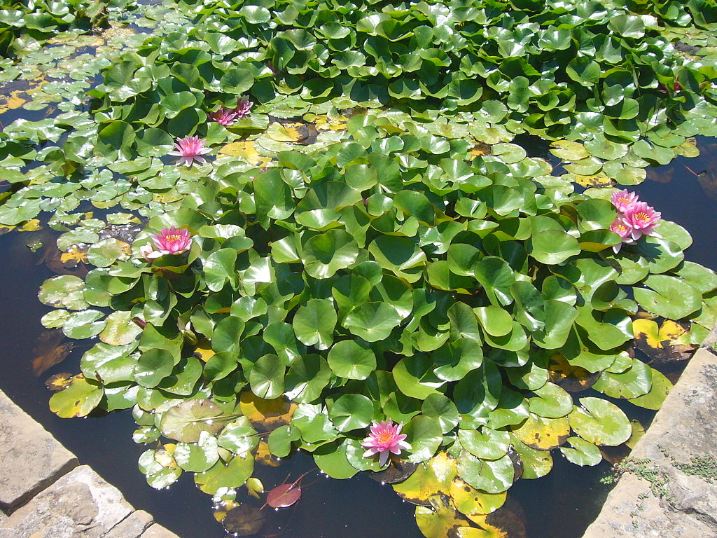 Parks and gardens in barcelona you need to see for Garden pond plants uk