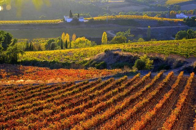 The Best Cava Vineyards In And Around Barcelona Spain