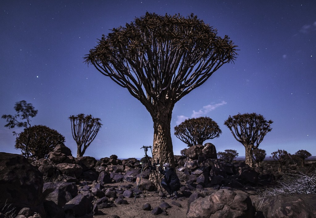 Quiver Tree Forest   Courtesy of Maciej Tomków