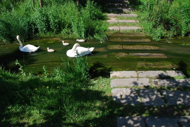A family of swans at the Koning Boudewijn Park | © Stephane Mignon/Flickr