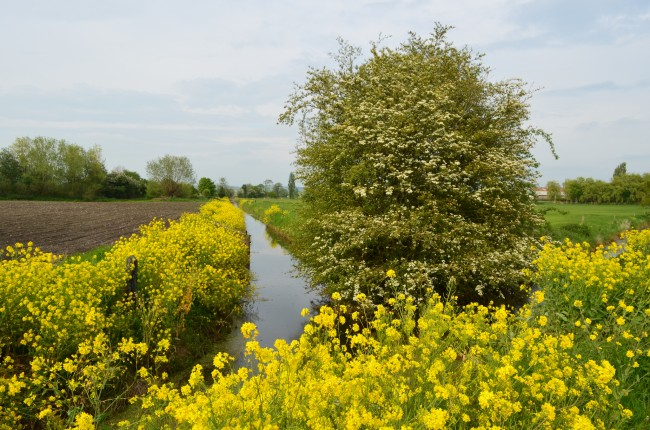 Walk along the Somerset Levels | © Nick/Flickr