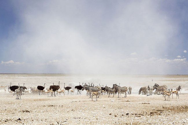 Etosha National Park | © Yathin S Krishnappa/WikiCommons