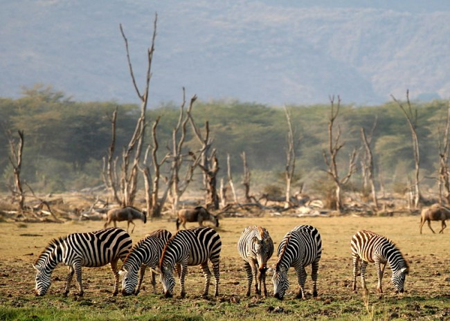 Lake Manyara National Park | © Gaurav Pandit/WikiCommons