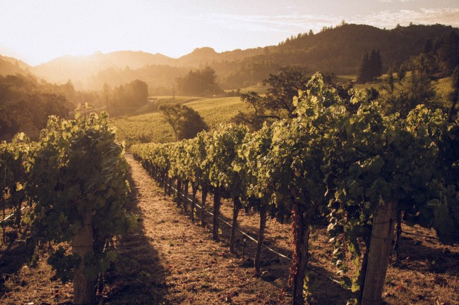 The Hess Vineyards in Napa Valley | mat79/Flickr
