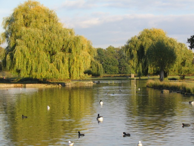 Bushy Park Woodland Gardens | © Kačka a Ondra / Flickr