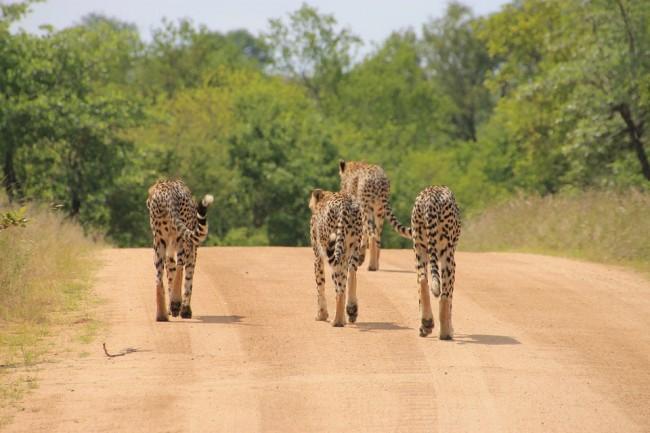 Kruger National Park | © danielhahner/PixaBay