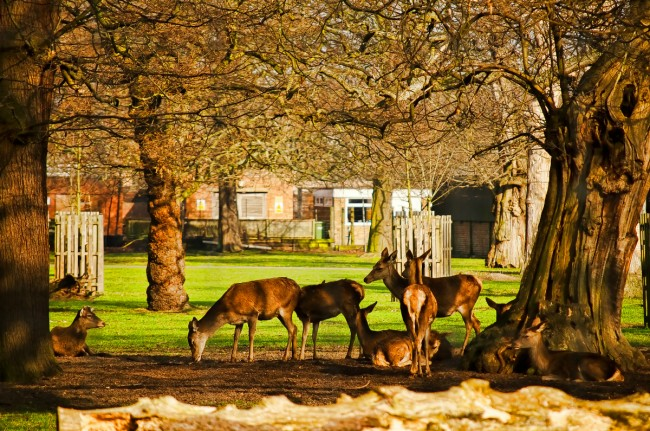 Greenwich The Wilderness Deer Park |© Garry Knight / Flickr