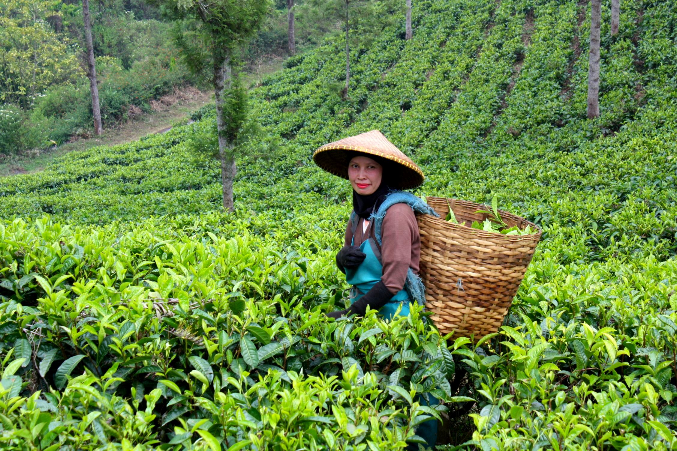 Visit The Tea Plantations Of Kerala, India: Munnar Tea Plantation Tour