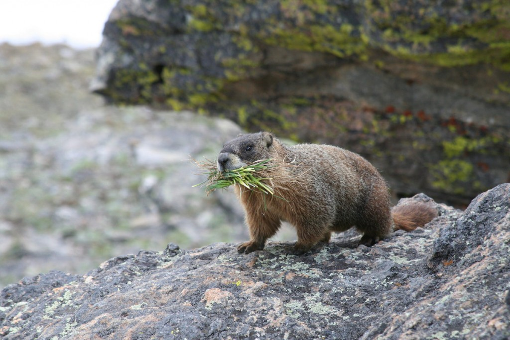 Find Some Furry Friends © Richard Giddins / Flickr
