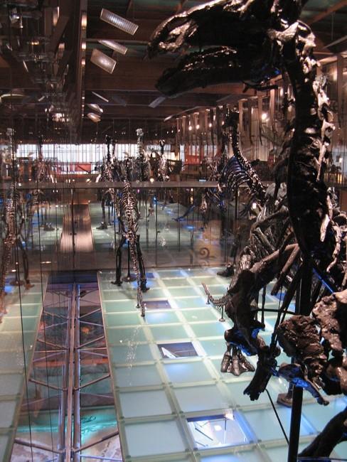 Musée des Sciences naturelles | WikiMedia
