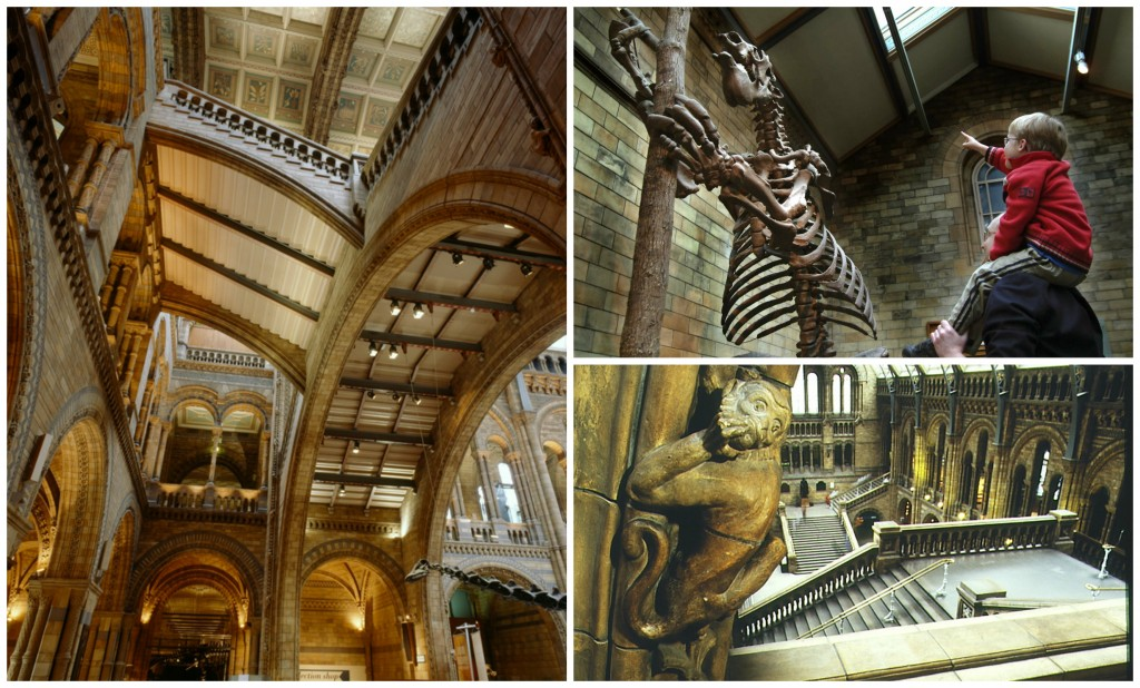 Natural History Collage