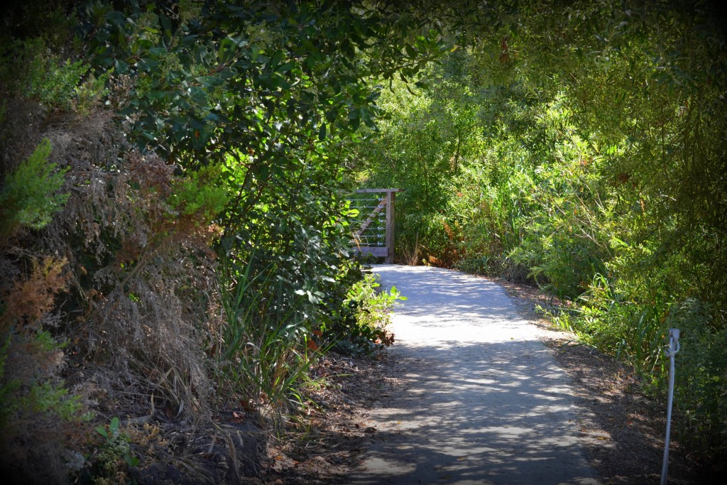 Path at Crystal Cove, California State Park ©Tracie Hall/Flickr