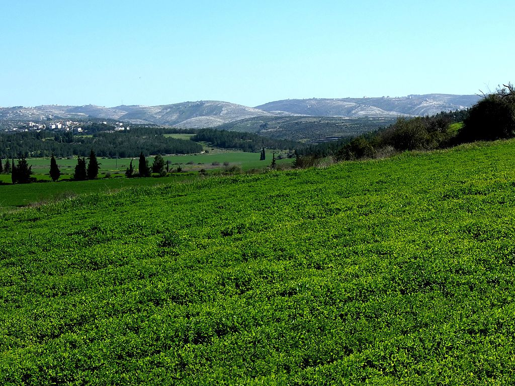 Elah Valley | © Davidbena/WikiCommons