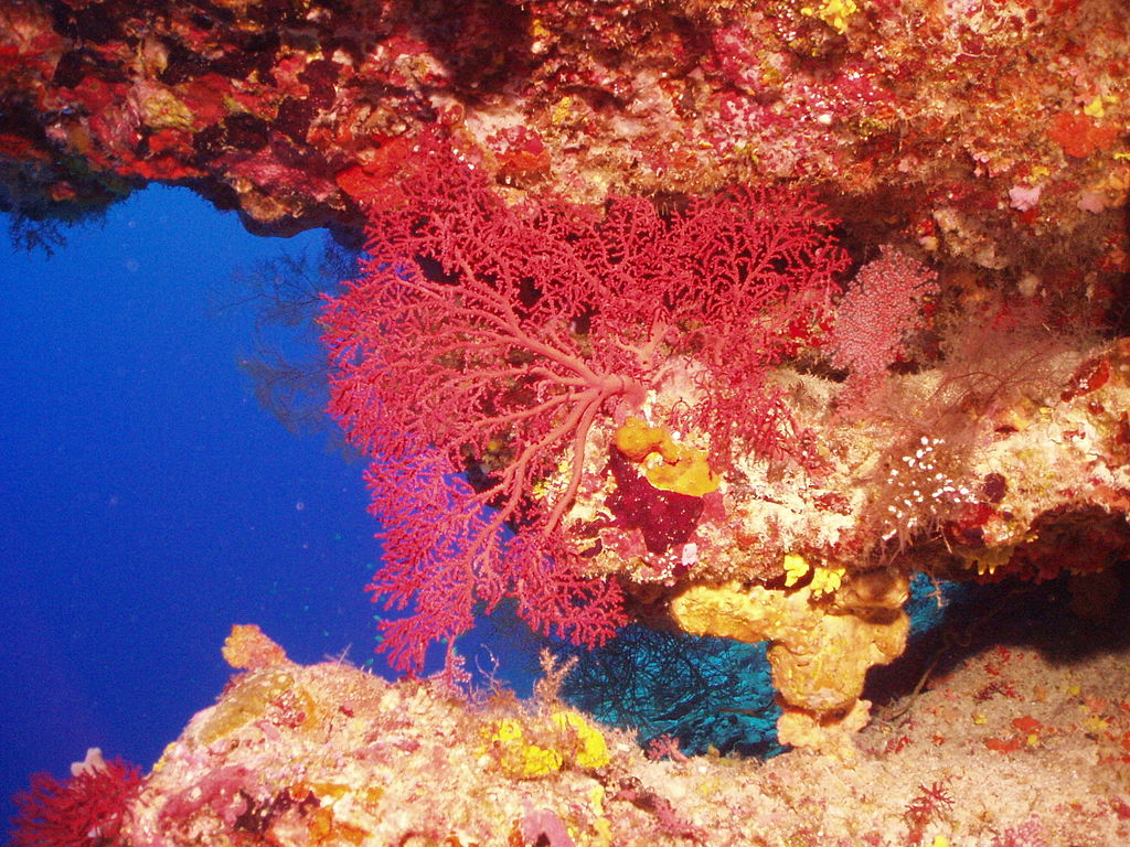 The 15 Most Beautiful Coral Reefs In The World 10 Most Beautiful Coral Reefs World