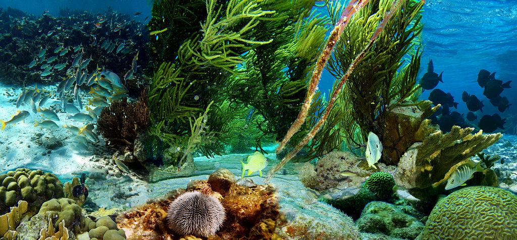 Underwater life of Klein Bonaire | © Michal Strzelecki, Wojtek Strzelecki i Jerzy Strzelecki/WikiCommons